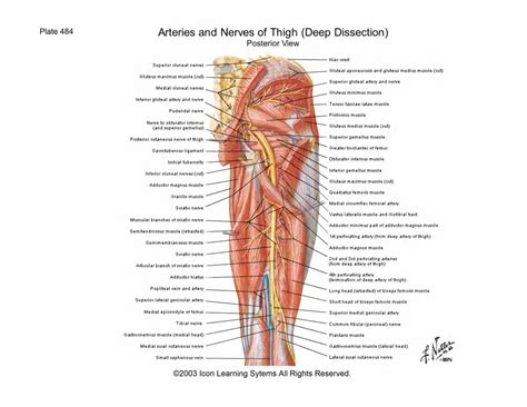 In the medial region is the point where the femoral artery