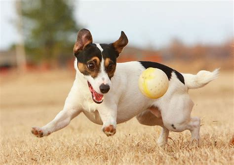 Playful Pets: Watch Out for Injuries - Women Fitness
